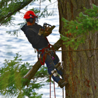 franciscos-tree-service-gallery-pic-12-new