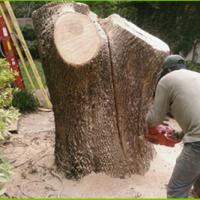 franciscos-tree-service-gallery-pic-15-new