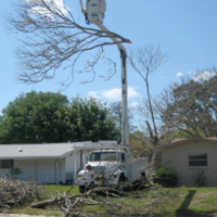 franciscos-tree-service-gallery-pic-17-new